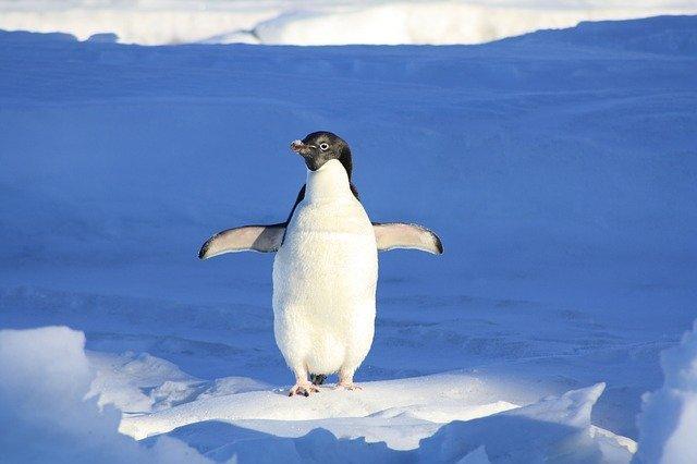 עדכון פינגווין 4.0 – אז מה היה לנו פה?